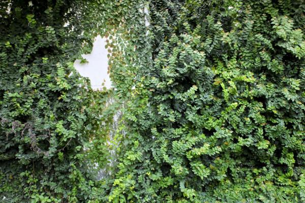 Green Naples