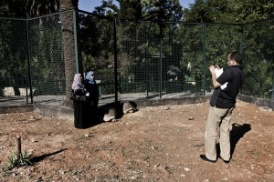 """A man photographs two women near large turtles inside the """"Parc du Belvedere"""" in Tunis on October 16, 2012."""