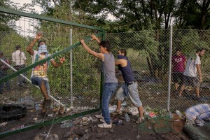 Migrants try to remove the gates during clashes with Hungarian anti-riot police at the Serbian border with Hungary in Horgos, Serbia on September 16, 2015. Hungary's border with Serbia has become a major crossing point into the European Union, with more than 160,000 access Hungary so far this year.
