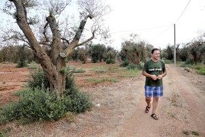 August 11, 2015 – Li Sauli, Italy: The grower Ivano Gioffreda is portrayed in an olive grove where trees show signs of infection by Xylella fastidiosa. Gioffreda is testing from about one year a mix of lime and copper sulfate to treat Xylella.