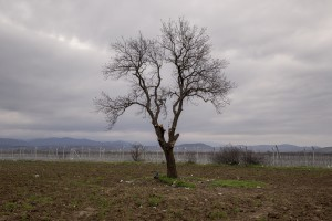 A tree is seen near at the Idomeni refugee camp on the Greek Macedonian border in Idomeni, Greece on March 16, 2016.