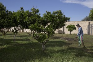 TRICASE, ITALY – NOVEMBER 12: A migrant cuts the grass inside Masseria Le Palme, a CAS (Extraordinary Reception Center) in Puglia, Southern Italy on November 12, 2016. CAS are imagined in order to compensate the lack of places inside ordinary reception center in case of substantial arrivals of migrants.