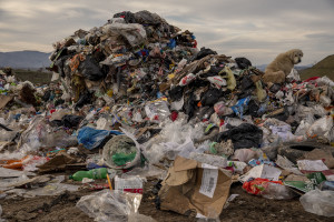 """A dog in seen among the waste of the """"Meglentsi"""" landfill near the cooling towers of the """"Rek-Bitola"""" coal power plant in Bitola, North Macedonia on March 1, 2020."""