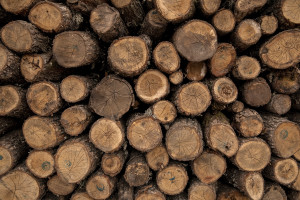 Wood is seen inside a shop in Skopje, North Macedonia on March 3, 2020. During the winter a large part of Macedonian citizens burns wood to keep warm. This obsolete heating system is one of the biggest contributors to air pollution in the country. Although the electricity tariffs in Macedonia are among the lowest in Europe, energy can cost a third or even half of a citizen's  average monthly salary. This is the reason why many residents burn wood to heat their home, often buying it on the black market where it costs less, but is more toxic to the environment.