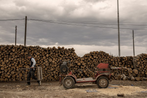 A man at work inside a shop that sells wood in Skopje, North Macedonia on March 3, 2020. During the winter a large part of Macedonian citizens burns wood to keep warm. This obsolete heating system is one of the biggest contributors to air pollution in the country. Although the electricity tariffs in Macedonia are among the lowest in Europe, energy can cost a third or even half of a citizen's  average monthly salary. This is the reason why many residents burn wood to heat their home, often buying it on the black market where it costs less, but is more toxic to the environment.